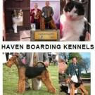 Logo of Haven Kennels  Cattery